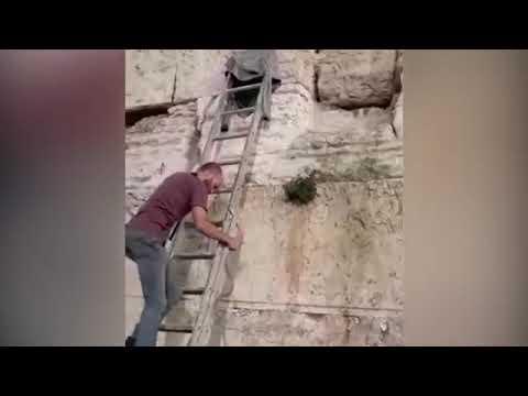 В Иерусалиме на Стене Плача - змея - знамение конца света