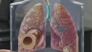 Afinal quais são os tipos e como a asma se desenvolve.