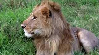 2004 New Edit of Kenya