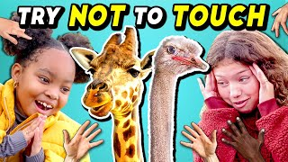 Parents & Kids Try Not To Touch Challenge (Ft. A Baby Giraffe)