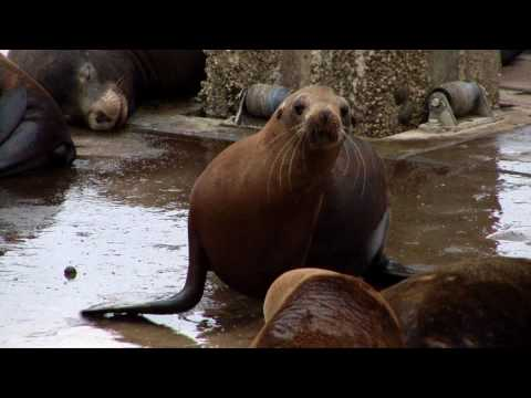 video:Come to Elkhorn Slough