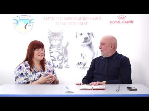 Хроническое заболевание почек у животных. Часть 2