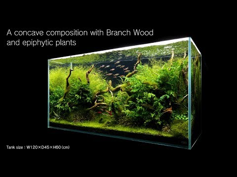 [ADAview] 120cm Aquarium Layout: Concave Composition with Driftwood and Epiphytic Plants