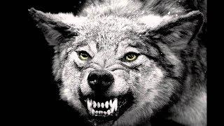 اقوى اغنية اجنبية دي جي الذئب | اقوى دي جي بالعالم