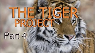 Arianna's Homeschool Tiger Project: Part 4