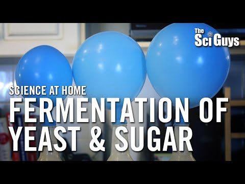 Fermentation of Yeast & Sugar – The Sci Guys: Science at Home