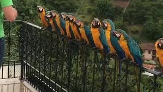 Karmienie linii papug