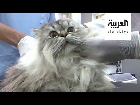 العرب اليوم - شاهد: أول إصابة لحيوان بفيروس كورونا في بريطانيا
