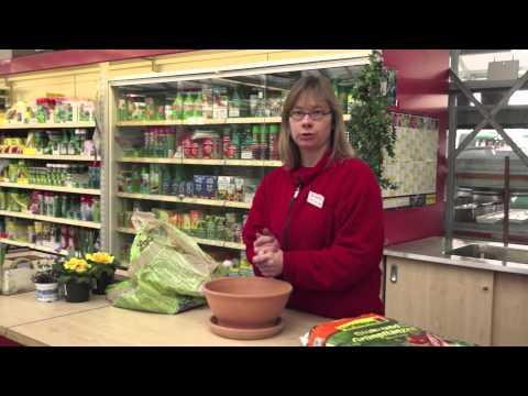 Kleine Gartenkunde: Schale bepflanzen