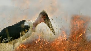 Fire and Feast | A Perfect Planet | BBC Earth