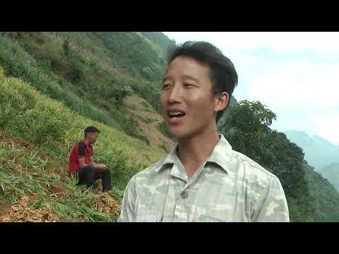 Nông dân xã Cán Cấu có nguồn thu gần 4 tỷ đồng từ cây gừng