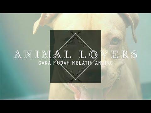 ANIMAL LOVERS: Cara Mudah Melatih Anjing Biar Patuh dan Setia