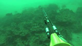 "Commercial Spearfishing ""Salty Slayer"""