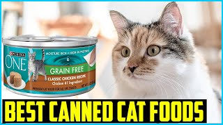Top 5 Best Canned Cat Foods in 2020