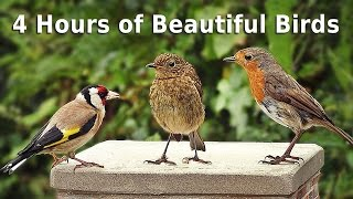 Sounds for Cats : 4 HOURS of Beautiful Garden Birds