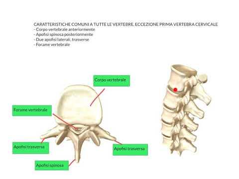 Efficace trattamento di artrite del ginocchio