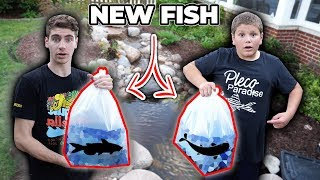 BUYING *NEW* FISH for HIS POND!!