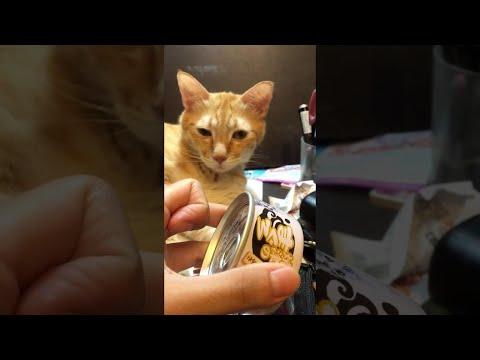 Реакция кошки на банку с кормом