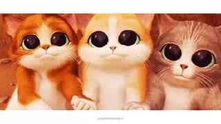 Gambar cover Cat Gangnam Style  funny animal videos