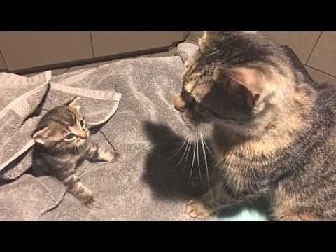 Foster Kitten Clover Goes to the Vet for His Legs!