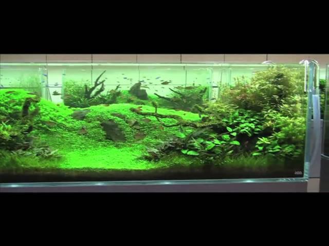 ADG in Japan 2010 Nature Aquarium Party