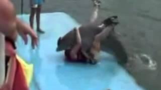 Dolphin rapes man
