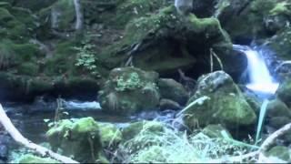 Relaxační hudba, měkké, relaxační, příroda, relaxační