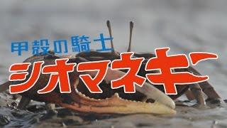 ガタバトル~甲殻の騎士シオマネキ~