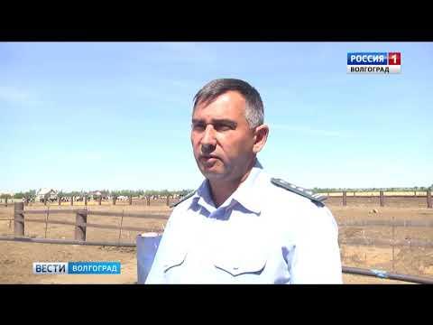 Специалисты Управления Россельхознадзора проводят эпизоотический мониторинг в Волгоградской области