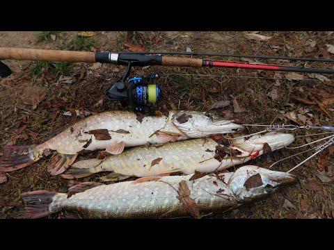 ЩУЧИЙ КОТЕЛ ВИДЕЛИ ? рыбалка на щуку туманным утром попали на жор щуки