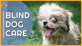 Why Dogs Go Blind and 5 Tips to Help Them Live a Full Life