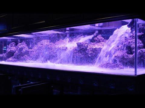 800 Aquarium pt2: Aquascape + Floating Shelf