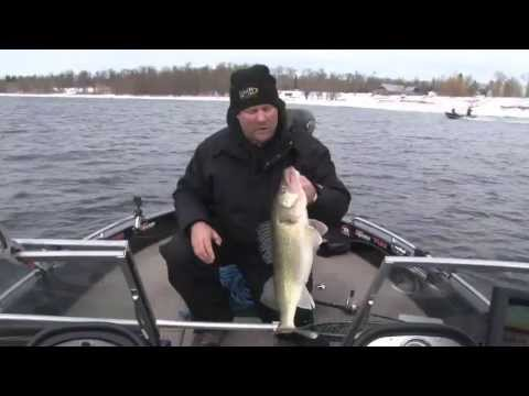 Fish Ed. Big Spring River Walleye