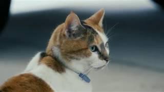 A Calico Cat (4K Experimental Film)