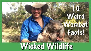 10 Things You Didn't Know About Wombats