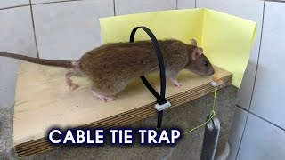 Cable Tie Rat/Mouse Trap