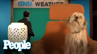 We Interview Anchorman 2's Baxter, and It's Amazing - Chatter | People