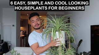 EASY HOUSE PLANTS FOR BEGINNERS