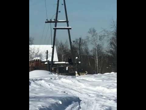 В Якутске на подростка напали собаки! (Видео)