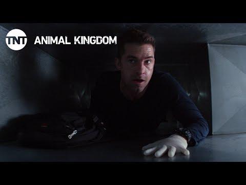 Animal Kingdom 2.05 (Preview)