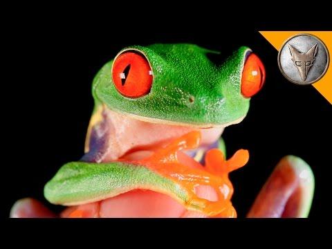 Neslavnější žába - Brave Wilderness