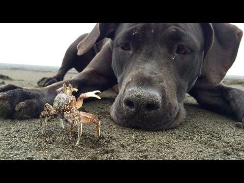 כלבה חמודה משחקת עם סרטן שהיא מצאה על שפת הים
