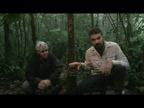 """""""Donde se encuentran las cosas salvajes"""" - El proyecto de cámaras trampa en Mashpi Lodge"""