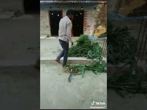 Трава бьёт человека, прикол!