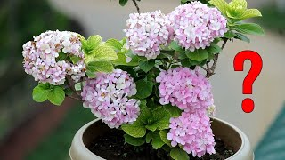 FIX - Common Hydrangea Problems and Organic Solutions