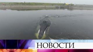 Благополучно закончилась история гренландского кита, который сел намель вустье реки.