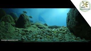 135 l - Akwarium biotopowe. Tanganika, Tanzania, Cape Kabogo