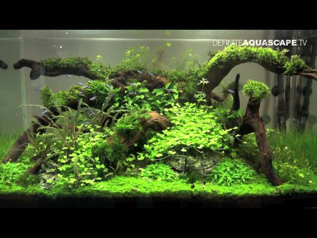 Aquascaping - Planted Aquarium at Tropica's booth, Heimtiermesse 2013, Hannover