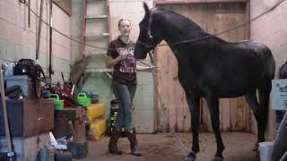 Feet cleaning and saddling Juniper 9-16-18