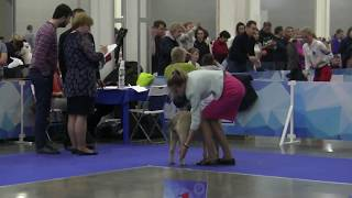 RUSSIA 1 2017 CDB female Champion